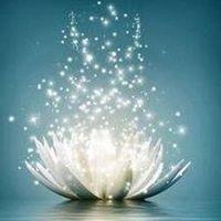 De Lotus