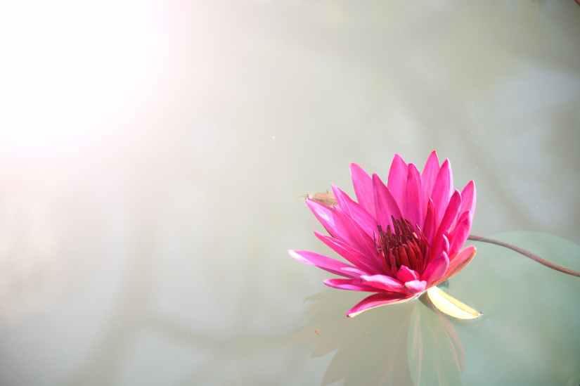 light nature water flowers